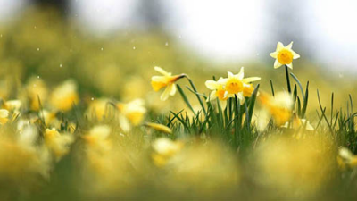 Refreshing Spring Rains
